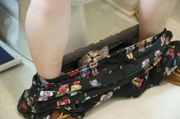 cat-pants.jpg