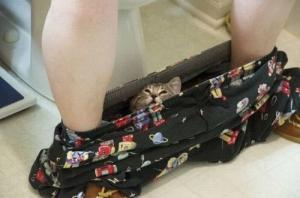cat pants
