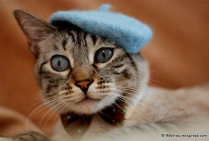 Cat-French-Beret