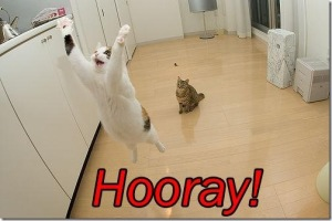 cat-saying-hooray_thumb