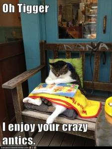 funny-cat-reading