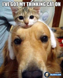 funny_fun_humour_pics_images_cat_sitting_dogs_head_photos_pictures_9